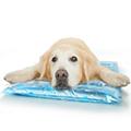 枕付きひえひえジェルマット (犬用 猫用 クールマット ひんやりマット)