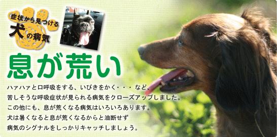 症状から見つける犬の病気 息が荒い