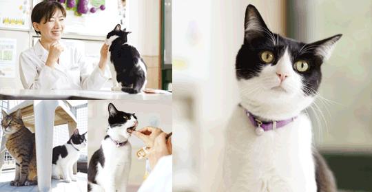 愛猫の幸せと長生きの素は、飼い主さんからのたっぷりの愛情と、一緒にいる時間を大切にしてあげること。