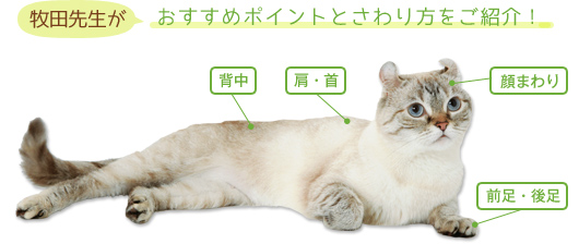 牧田先生がおすすめポイントとさわり方をご紹介!