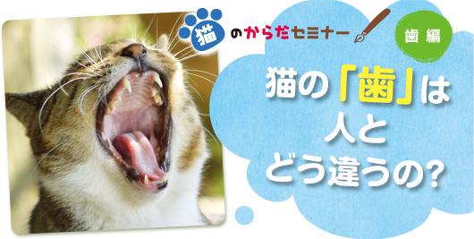 猫のからだセミナー 歯編 猫の「歯」は人とどう違うの?