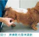 図11 麻痺肢の屈伸運動
