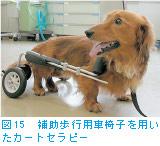 図15 補助歩行用車椅子を用いたカーセラピー