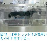 図16 水中トレッドミルを用いたハイドロセラピー