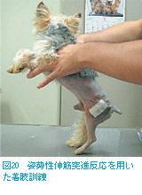 図20 姿勢性伸筋突進反応を用いた着肢訓練