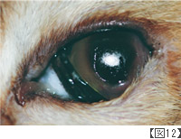 角膜分離症(黒色壊死症)