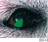 角膜潰瘍画像