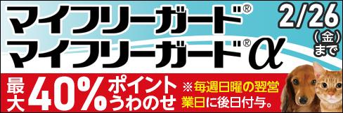 【マイフリーガード・マイフリーガードαキャンペーン】最大40%ポイントUP!~2/26(金)まで!!