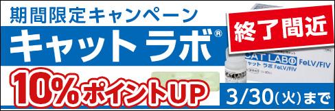10%ポイント還元!【キャットラボFeLV/FIV】期間限定キャンペーン! ~3/30(火)まで!!