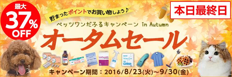 ベッツワンだふるキャンペーン in Autumn